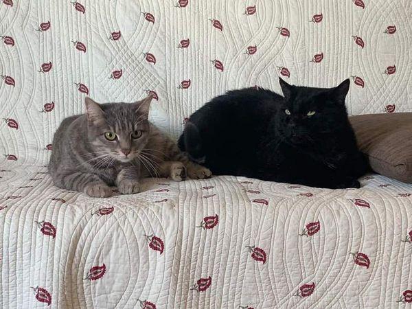 Parce que les adultes sont tout aussi importants que les chatons... Gin et Pacha,ont attéri à l'association en raison l'hospitalisation (malheureusement longue durée) de leur maîtresse. Ils seront prochainement proposés à l'adoption